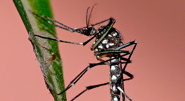 Quais-outras-doenças-transmitidas-pelo-Aedes-podem-atingir-o-Brasil